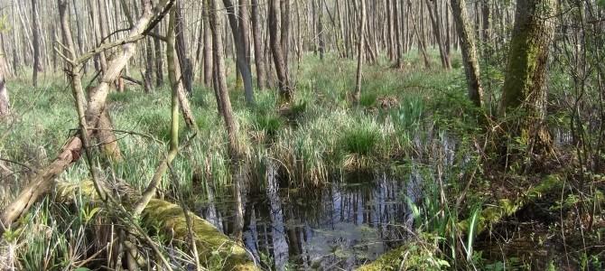 Rezerwat Przyrody Karpaty – wycieczka rowerowa – 11 czerwca