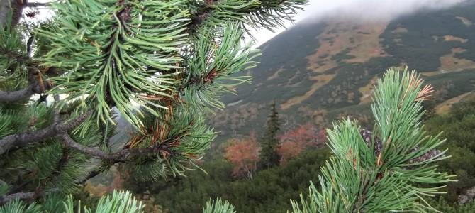 Zakopane – górskie klimaty