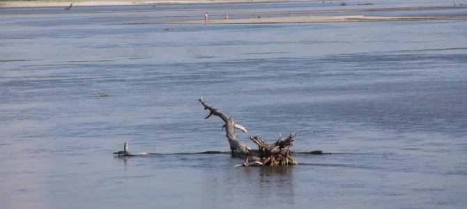 Nadwiślańskie Klimaty – spacer nad dwiema rzekami, 18 km, niedziela 4 czerwca