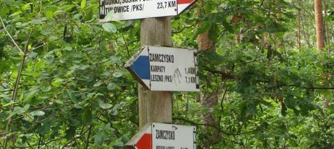 Niedzielna wycieczka po Puszczy Kampinoskiej, 2 lipca