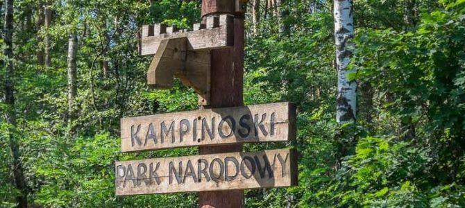 Jesienna Puszcza Kampinoska, wycieczka rowerowa, sobota 6 października