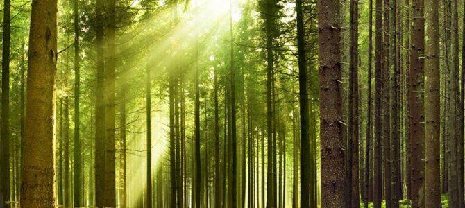 Spacer przez Las Młochowski, niedziela 23 maja